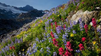 Mount rainier national park washington flowers landscapes wallpaper