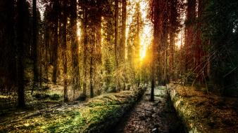 Sun trey ratcliff forests trail woods Wallpaper