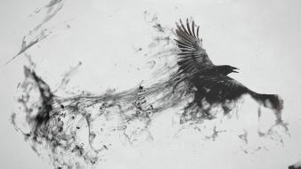 Crows white background wallpaper