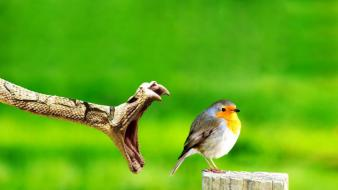 Green birds snakes prey jaws reptiles background robins Wallpaper