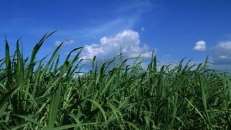 Japan grass skyscapes Wallpaper