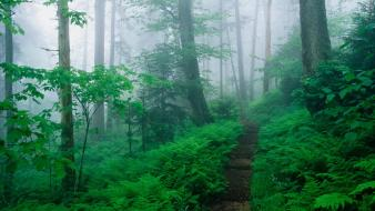 Mountains landscapes nature tennessee trail appalachian ridge foggy wallpaper