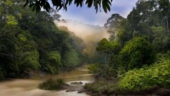 Nature dawn jungle forest malaysia rivers view wallpaper