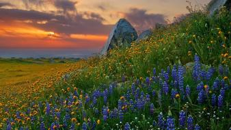 Nature flowers california skyscapes view sea wallpaper