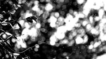Nature leaves grayscale bokeh depth of field wallpaper