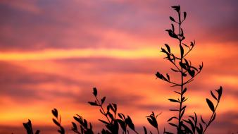 Sunset silhouette plants Wallpaper