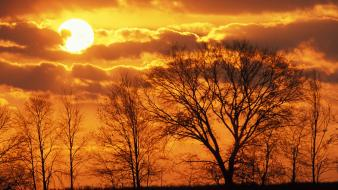 Sunset sun trees skyscapes virginia wallpaper