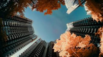 Trees cityscapes multicolor yiu yu hoi wallpaper