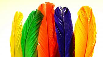 3d colors feathers wallpaper