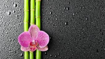 Adidas bamboo flowers orchids water drops wallpaper