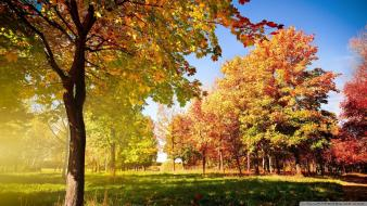 Autumn beginning nature seasons Wallpaper
