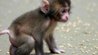 Baby animals monkeys nature Wallpaper