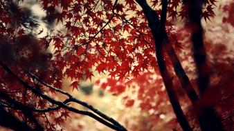 Deviantart autumn forests leaves momiji wallpaper