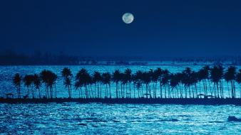 Puerto rico landscapes moonlight nature palm trees wallpaper