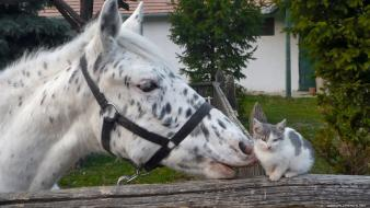 Animals cats horses kissing nature Wallpaper