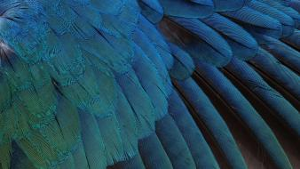 Birds feathers wallpaper