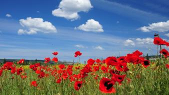 Clouds flowers grass landscapes poppies wallpaper