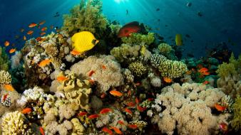 Coral reef fish nature underwater wallpaper