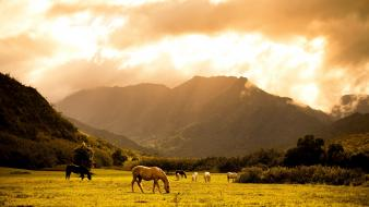 Grass horses scenic wallpaper