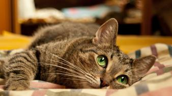Animals big eyes cats green lying down Wallpaper