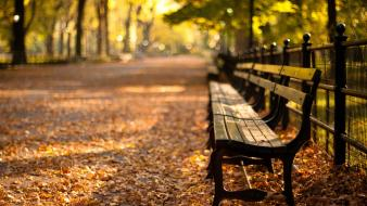 Autumn bench parks trees wallpaper