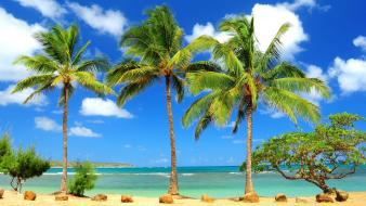 Beaches blue deserts ocean palm trees wallpaper