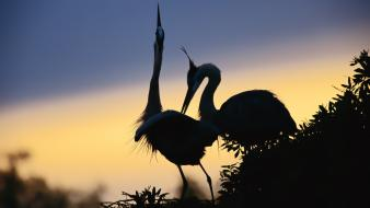 Birds cranes nature silhouettes wallpaper