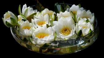 Black background bowls flowers nature water lilies wallpaper
