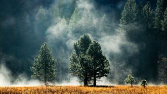 Fields fog forests trees wallpaper
