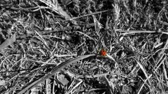 Grass insects ladybirds selective coloring weeds wallpaper