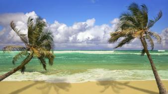 Hawaii beaches hanging palm trees wallpaper