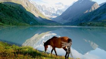 Horses lakes landscapes mountains wallpaper