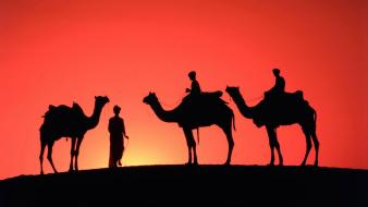 India animals camels nature sand dunes wallpaper