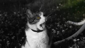 Animals black and white cats Wallpaper