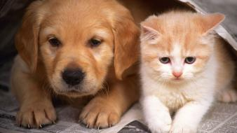 Animals cats dogs kittens nature Wallpaper
