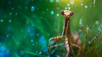 Animals grass mantis nature rain wallpaper