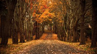 Autumn fallen leaves path streets trees wallpaper