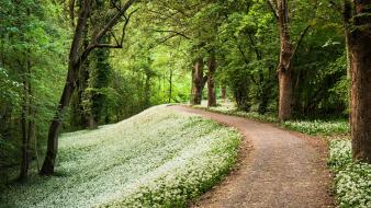 Avenue flowers forests paths roads Wallpaper