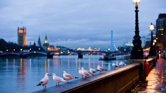 Buckingham palace london eye river thames birds wallpaper