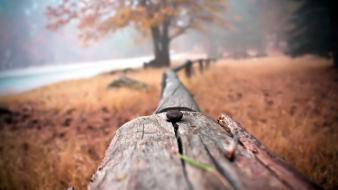 Fences nature trees wood wallpaper