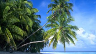 Maldives beaches islands landscapes palm trees wallpaper