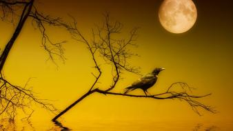 Moon birds black night silhouettes wallpaper