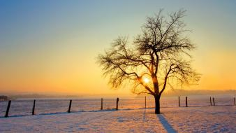 Cold morning nature wallpaper