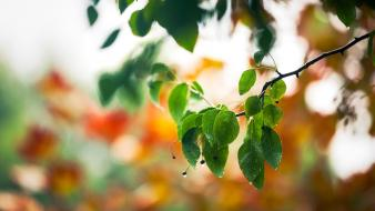 Depth of field leaves macro nature trees wallpaper