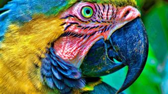 Blue nature yellow birds parrots macaw wallpaper