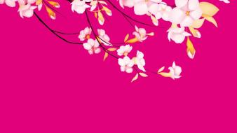 Cherry blossoms flowers pink vector wallpaper