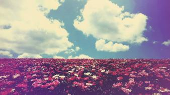 Clouds landscapes nature flowers fields summer skyscapes wallpaper