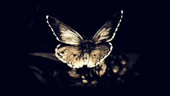 Fly gothic darkness moths butterfly wings butterflies wallpaper