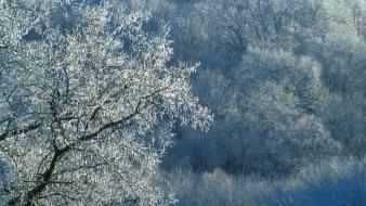 Ice nature winter trees tennessee covered wallpaper