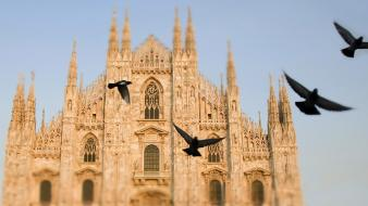 Italy pigeons cathedral milan city wallpaper